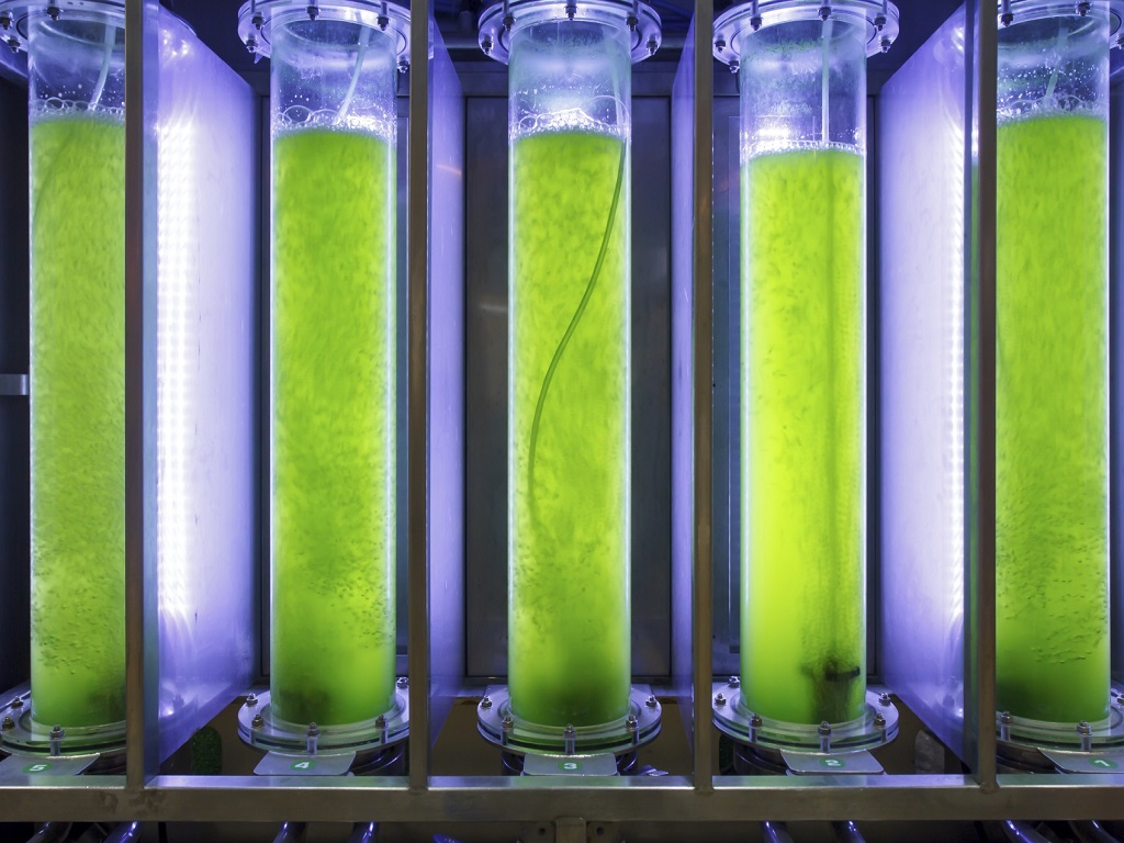 Test Tube Algae