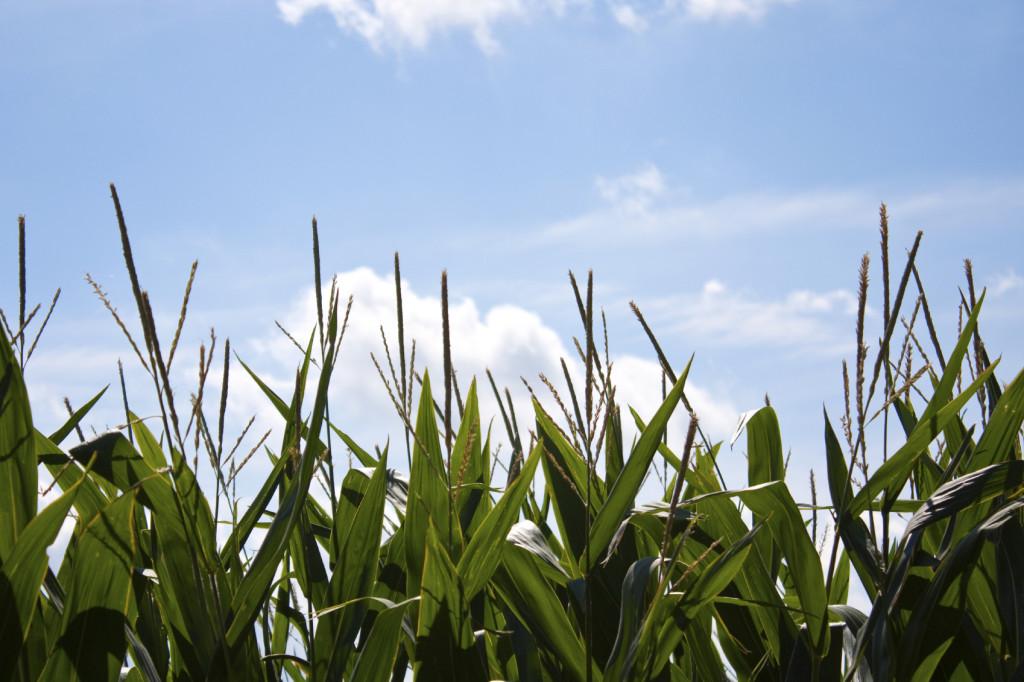 Mixer Direct Ethanol & Bio-Diesel